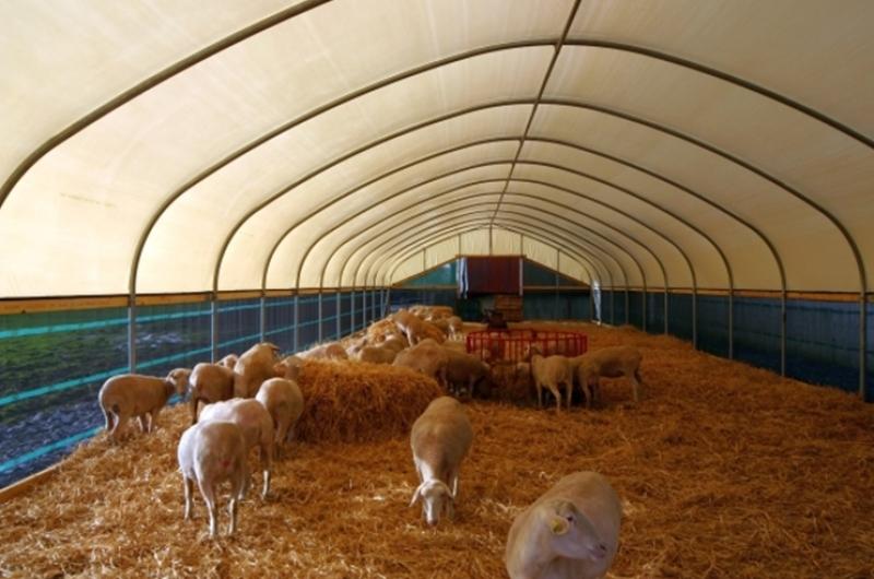 Как открыть ферму по выращиванию баранов 48
